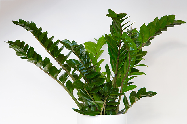 The Best Houseplants for Low-Light Spaces & The Best Houseplants for Low-Light Spaces - Sierra Real Estate azcodes.com